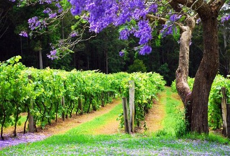 Bago Vineyards - Accommodation Melbourne