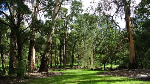 Wildwood Retreat - Accommodation Melbourne