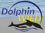 Dolphin Wild - Accommodation Melbourne