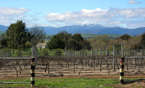 Buller View Wines - Accommodation Melbourne
