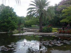 Brisbane City Botanic Gardens - Accommodation Melbourne