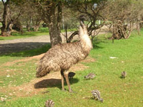 Minlaton Fauna Park - Accommodation Melbourne