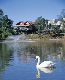 White Swans - Accommodation Melbourne