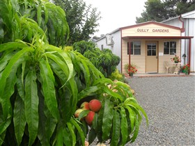 Gully Gardens - Accommodation Melbourne
