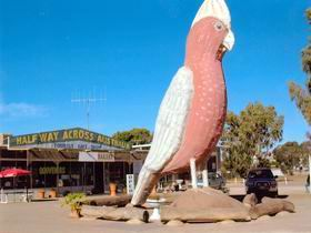 The Big Galah - Accommodation Melbourne