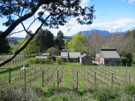Wilmot Hills Vineyard - Accommodation Melbourne