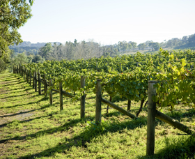 Surveyor's Hill Vineyards - Accommodation Melbourne