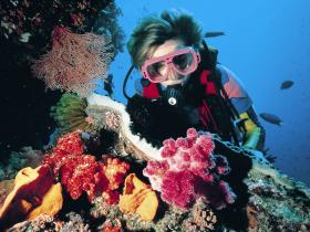 Cook Island Dive Site - Accommodation Melbourne