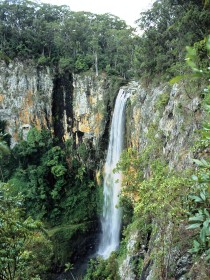Gondwana Rainforests of Australia - Accommodation Melbourne