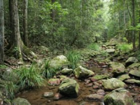 Amamoor State Forest - Accommodation Melbourne