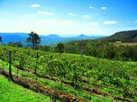 Preston Peak Wines - Accommodation Melbourne