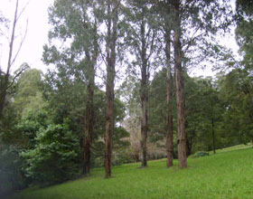 Mount Dandenong Arboretum - Accommodation Melbourne