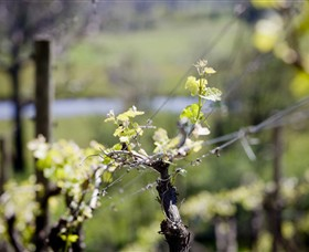 Norton Estate Wines - Accommodation Melbourne