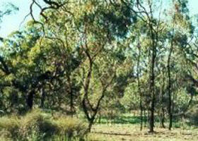 Leaghur State Park - Accommodation Melbourne
