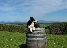Windy Ridge Vineyard and Winery - Accommodation Melbourne