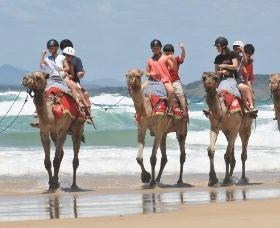 Camel Rides with Coffs Coast Camels - Accommodation Melbourne