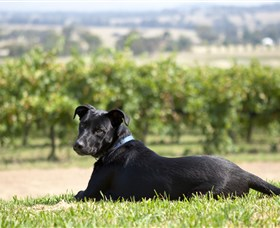 Moothi Estate Vineyard and Cellar Door - Accommodation Melbourne