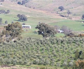 Wymah Organic Olives and Lambs - Accommodation Melbourne