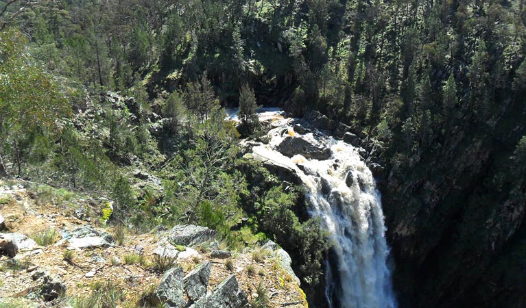 Grove Creek Falls walking track - Accommodation Melbourne