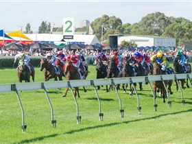 Morphettville Racecourse - Accommodation Melbourne