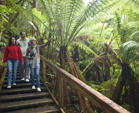 Otway Fly Treetop Adventures - Accommodation Melbourne