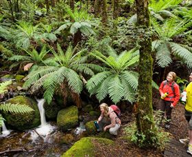Baw Baw National Park - Accommodation Melbourne