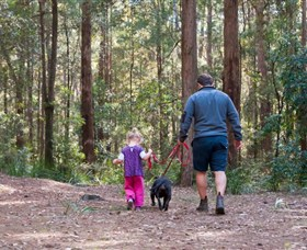 Olney State Forest - Watagan Mountains - Accommodation Melbourne