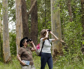 Chichester State Forest - Accommodation Melbourne