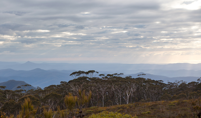 Mount Budawang trail - Accommodation Melbourne