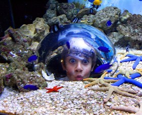 Sea Life Sunshine Coast - Accommodation Melbourne