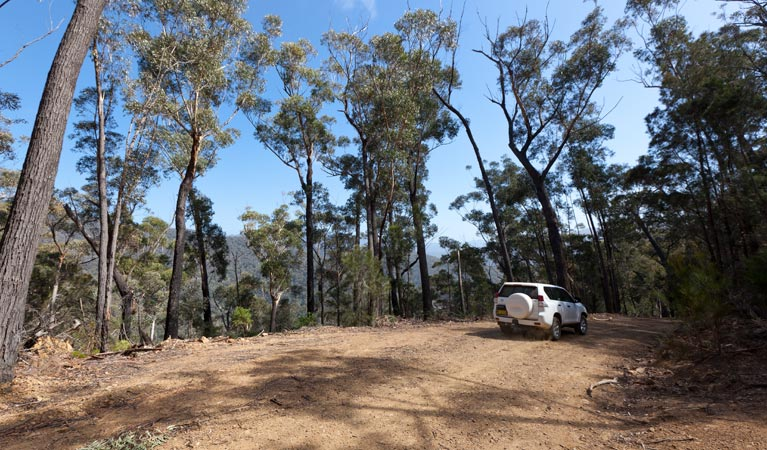 Wadbilliga Road drive - Accommodation Melbourne