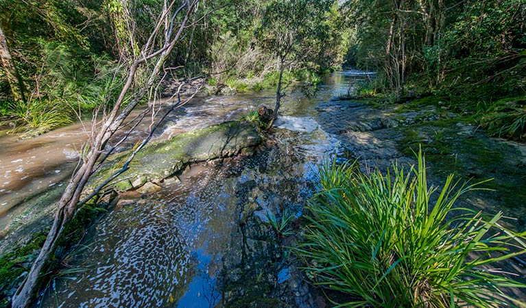 Dawson River walking track - Accommodation Melbourne