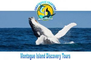 Lighthouse Charters Narooma - Accommodation Melbourne