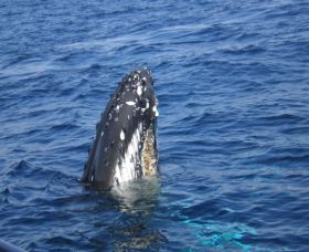 Jervis Bay Whales - Accommodation Melbourne