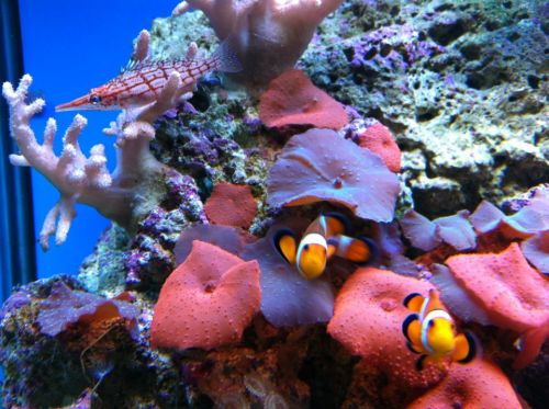 Tropical Marine Centre - Accommodation Melbourne