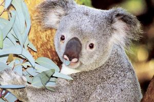 Perth Zoo General Entry Ticket and Sightseeing Cruise - Accommodation Melbourne