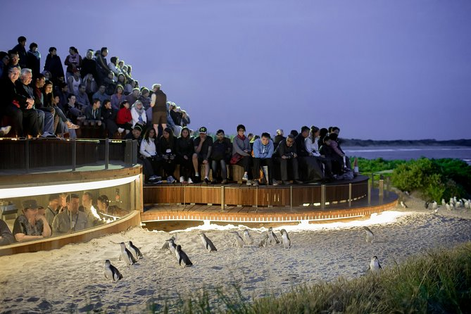 1 Day Private Phillip Island Tour VIP Charter up to 9 People - Accommodation Melbourne