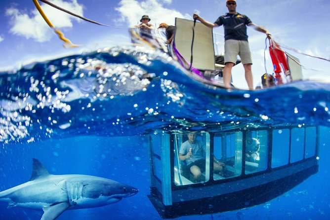 White Shark Tour with Optional Cage Dive from Port Lincoln - Accommodation Melbourne