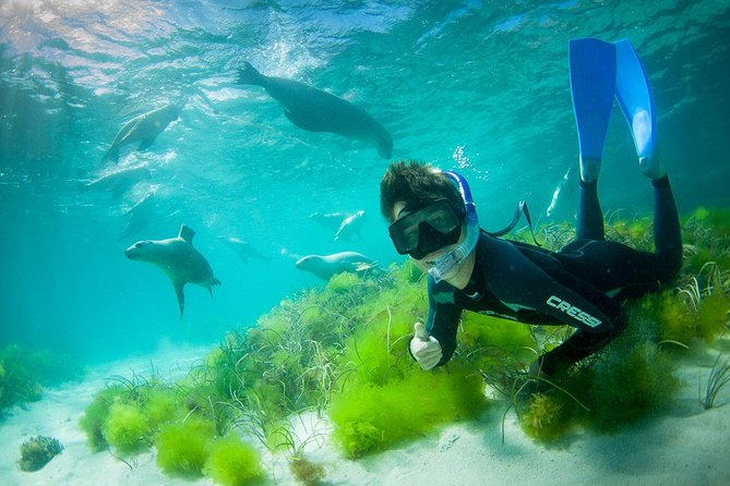 Half-Day Sea Lion Snorkeling Tour from Port Lincoln - Accommodation Melbourne