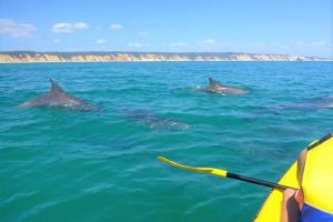 Half-Day Kayak with Dolphins and 4WD Beach Drive from Rainbow Beach - Accommodation Melbourne