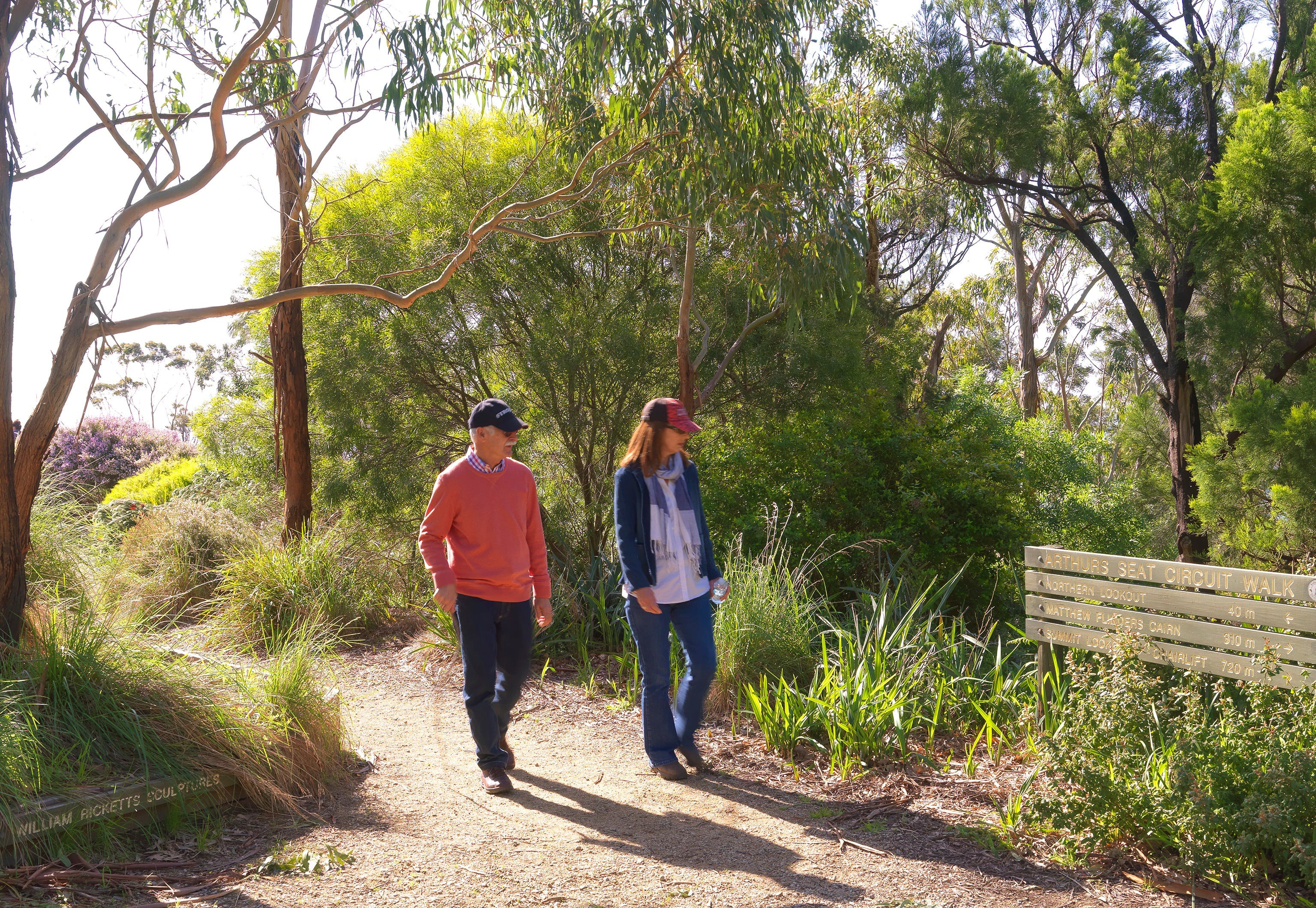 Arthurs Seat Circuit Walk - Accommodation Melbourne