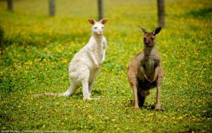 Bordertown Wildlife Park - Accommodation Melbourne