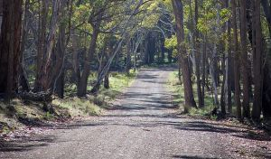 Coolah Tops National Park - Accommodation Melbourne