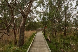 The Briars Park Walking Trails - Accommodation Melbourne