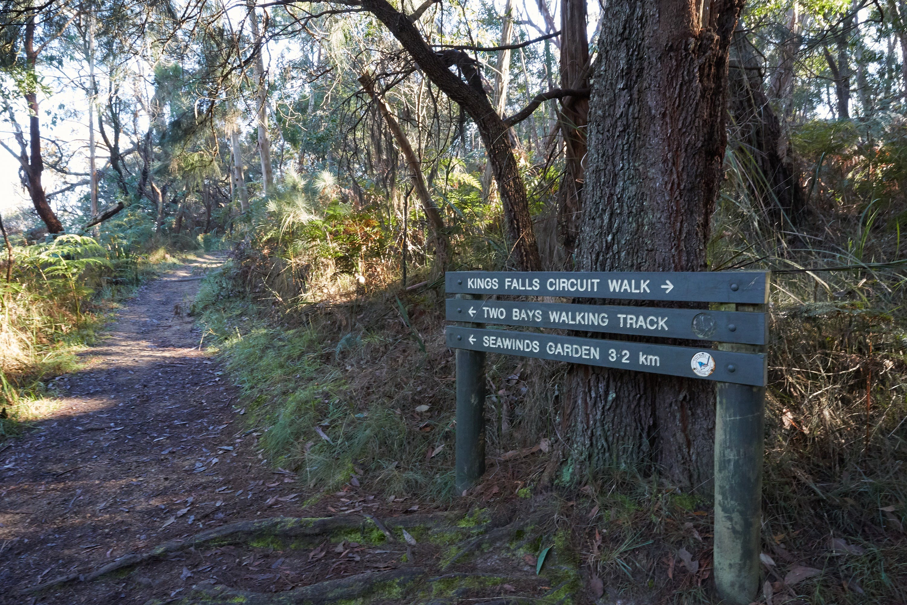 Arthurs Seat to Kings Falls Walk - Accommodation Melbourne