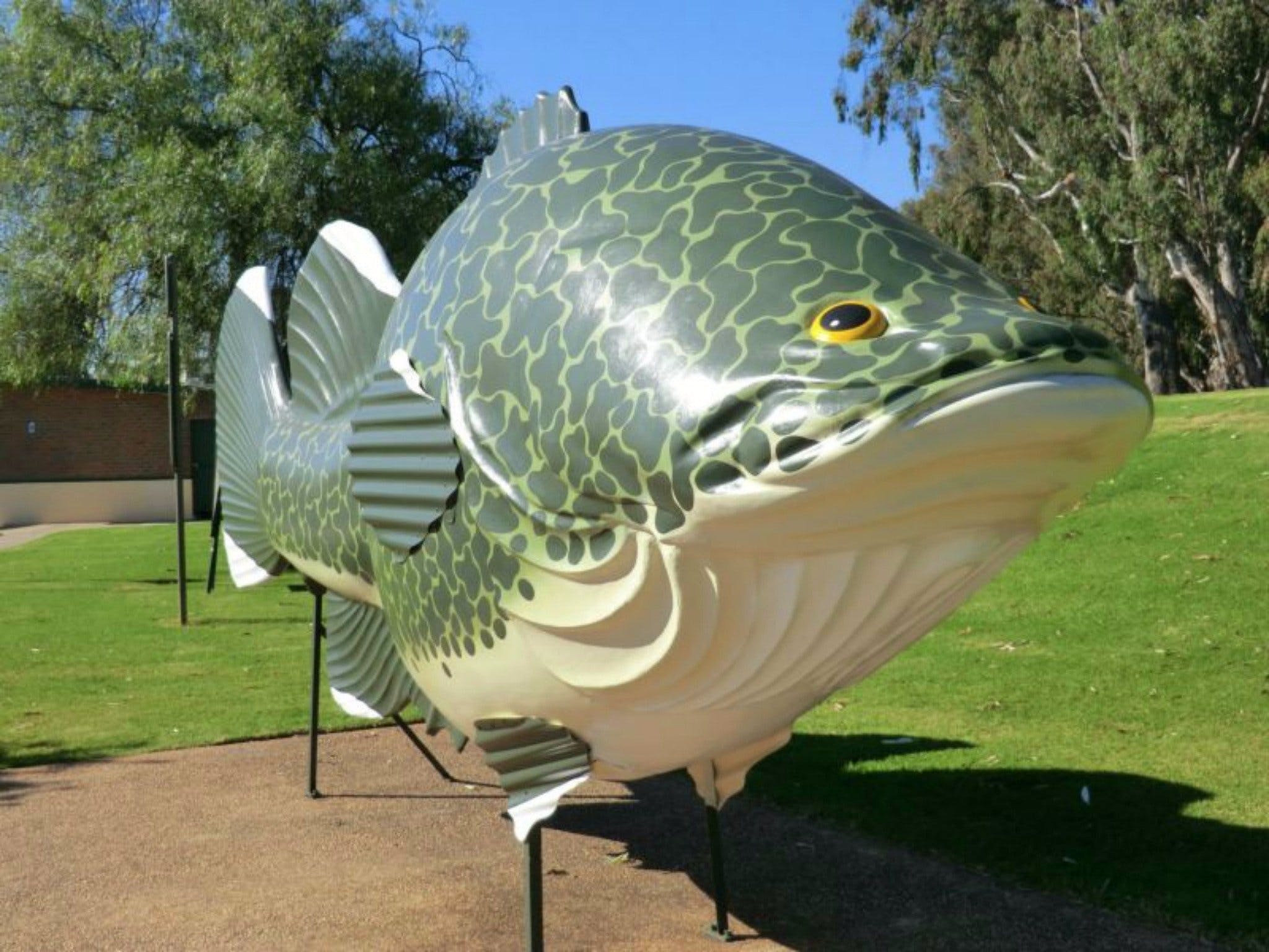 Big Murray Cod - Accommodation Melbourne