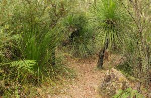 Grass Tree Circuit - Accommodation Melbourne