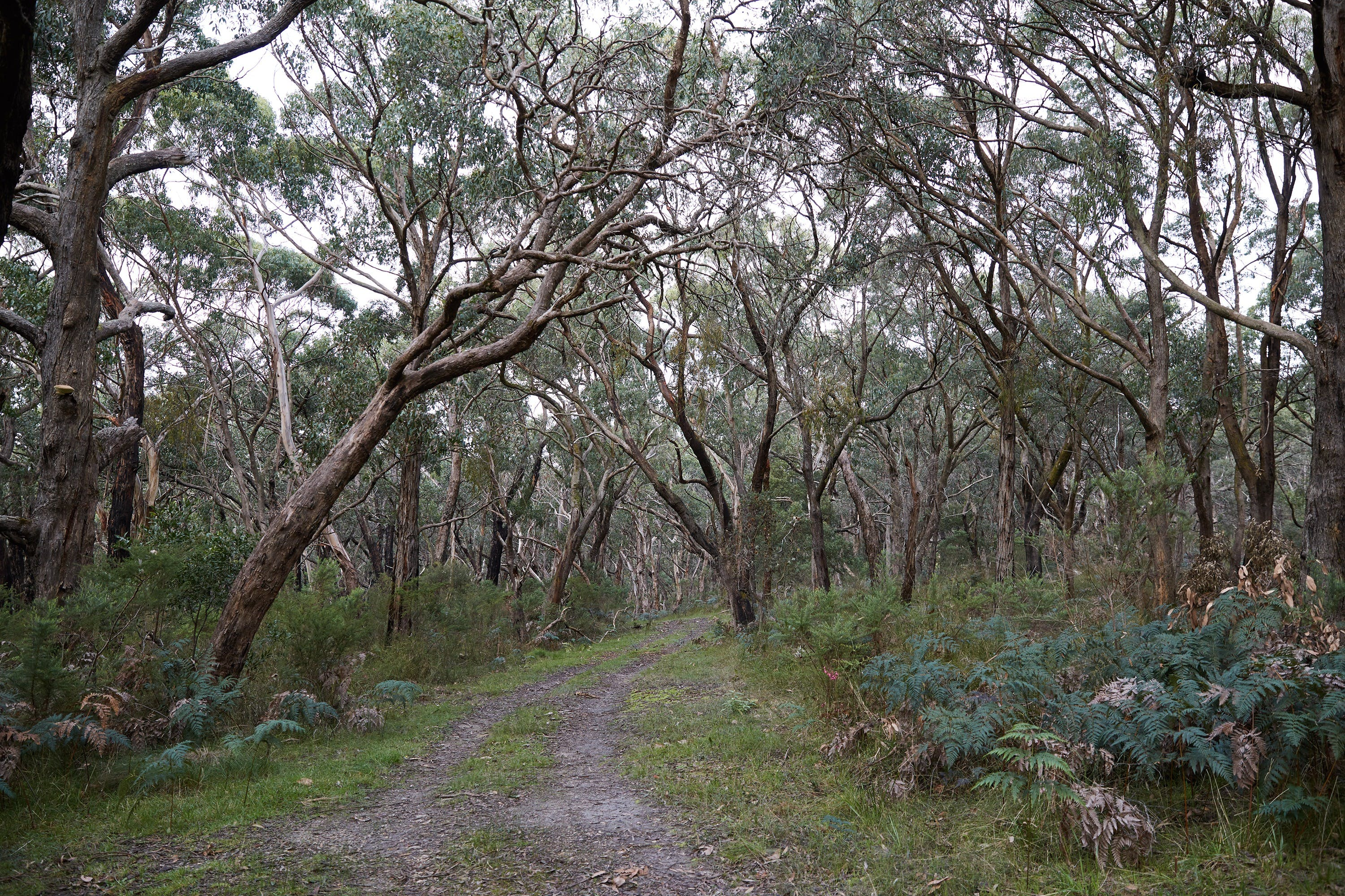Pink Line and Loop Trail - Mountain Biking - Accommodation Melbourne