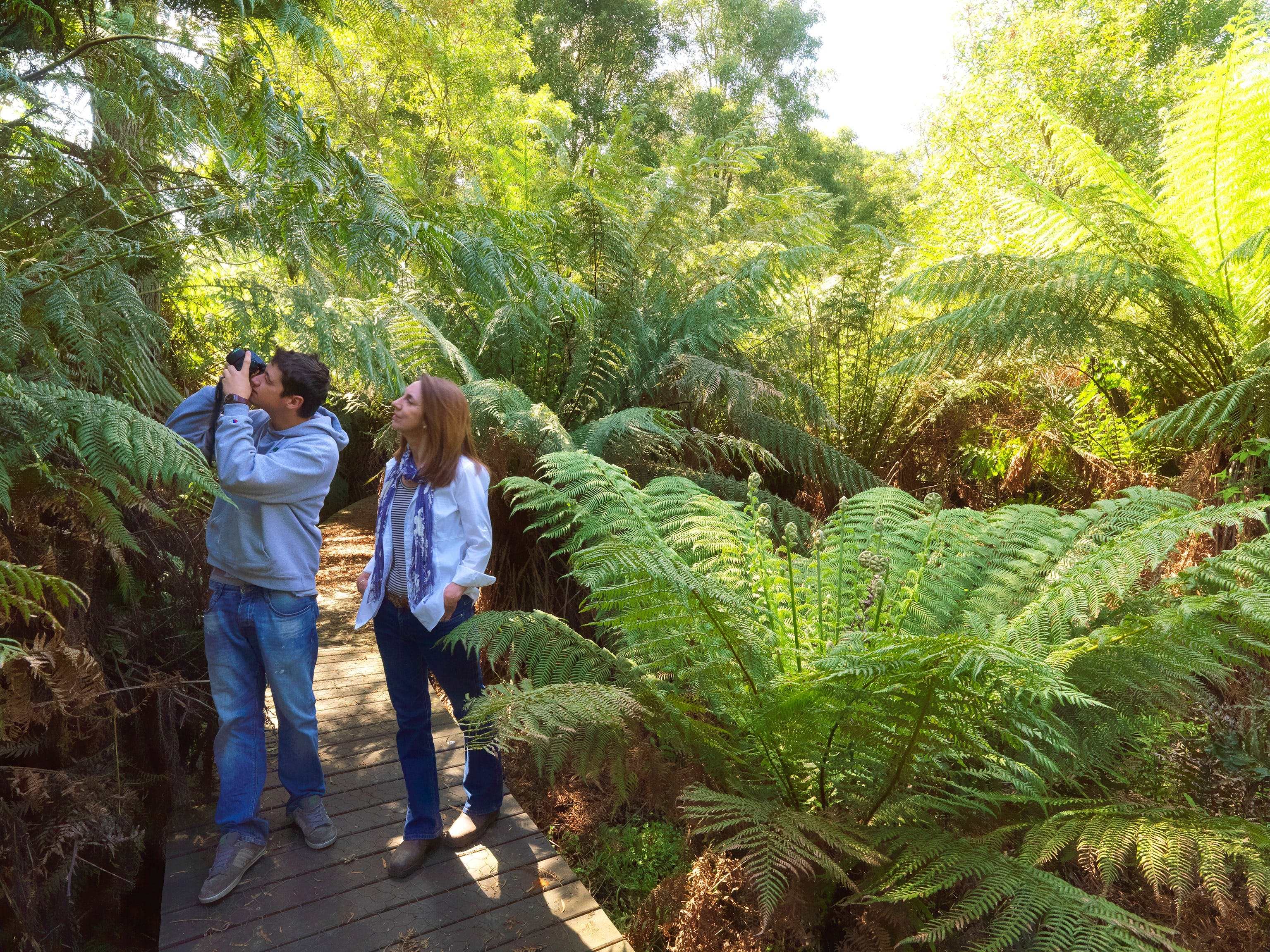 Endeavour Fern Gully Walks - Accommodation Melbourne