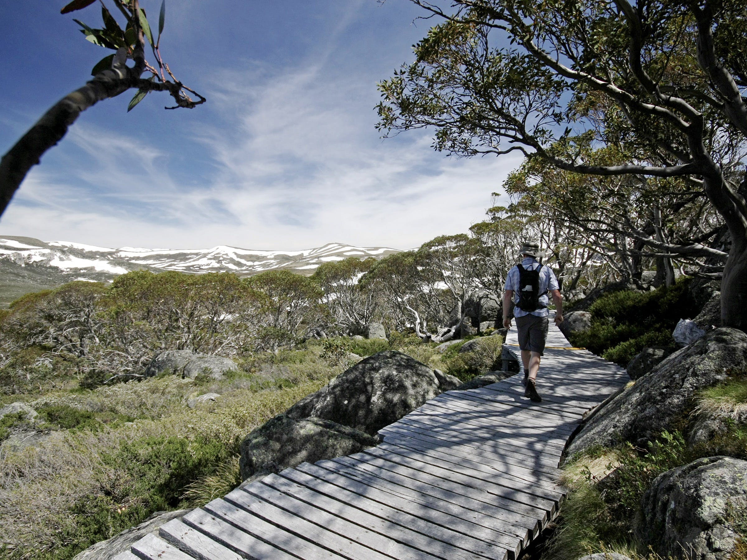 Snow Gums boardwalk - Accommodation Melbourne